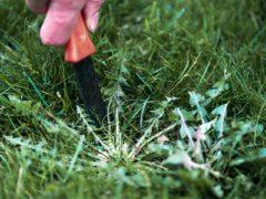 comment enlever les mauvaises herbes